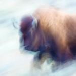 Spirit Bison